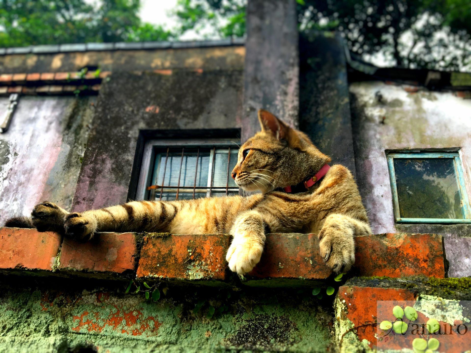 台湾の「猫村」世界6大猫スポット